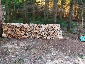 Gefahren für die Waldameisen u.a. die Forstwirtschaft. CC BY SA 4.0 Isabelle Trees Frauenkappelen Switzerland