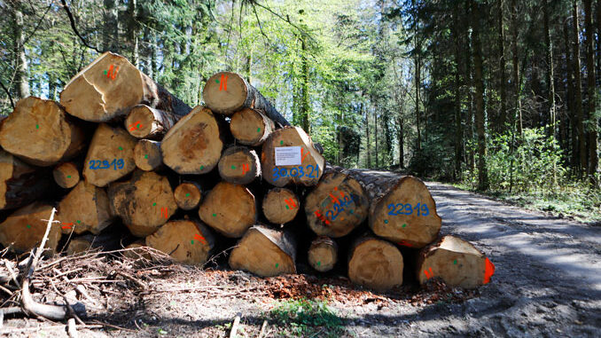 Oekosystem Wald unter Druck. Mit Insektizid behandeltes Holzlager. CC BY SA 4.0 Isabelle Trees Switzerland